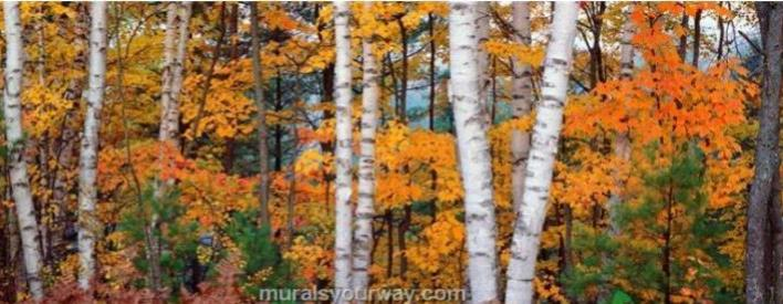 michigan fall cropped - Copy